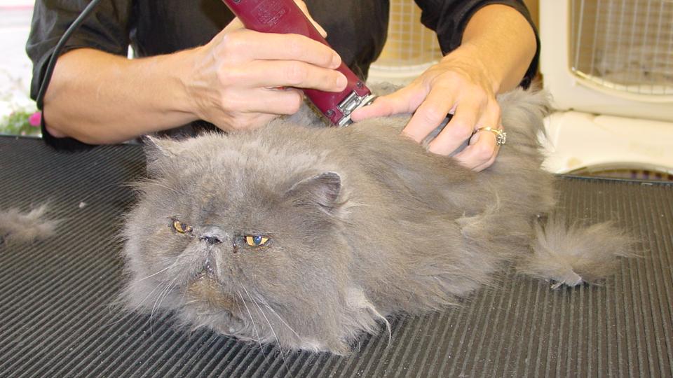 AAA Pet Pros Grooming